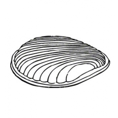 Pactiv P6182 Plastic Dome Lids for Shell Shaped Aluminum Caterbowl Jr., Clear - 25 / Case